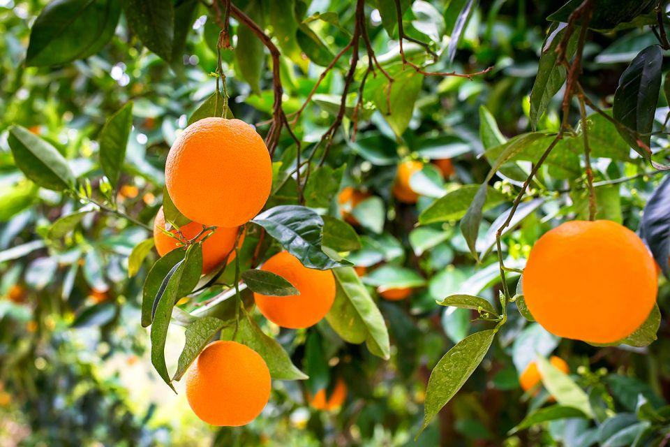 Creta, la frutta, La flora, La fauna e la flora, Creta