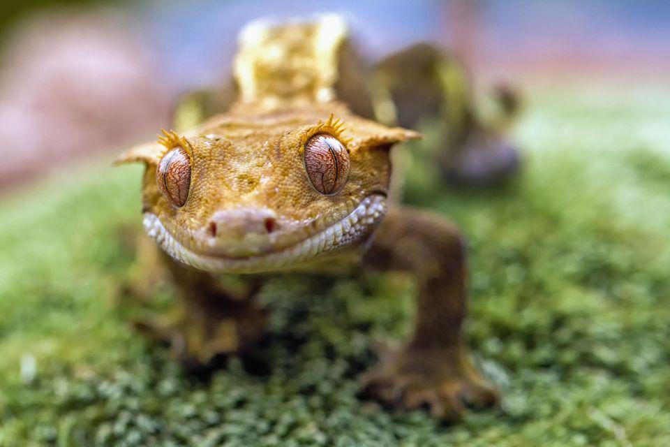 Océanie, Nouvelle-Calédonie, France, Parc de la Rivière Bleue, faune, animal, gecko, lézard, reptile, riviere,