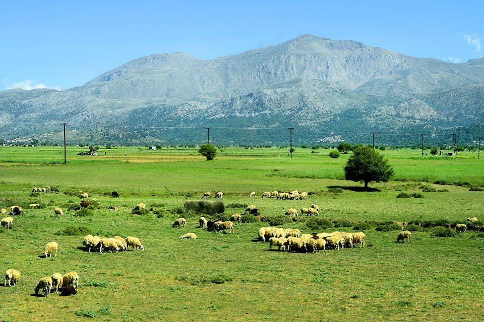The Livestock, The archaeological sites of the Lassithi plateau, Monuments, Crete