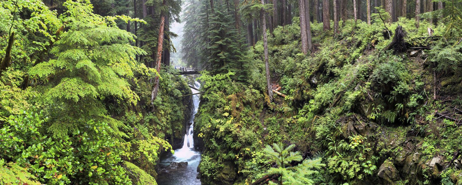 Les paysages, USA amerique etats-unis Olympic National Park parc Washington Olympic hoh.