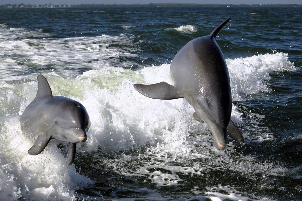 Les parcs et les réserves, floride, USA, Amérique, Etats-Unis, keys, océan, caraïbes, faune, animal, mammifère, dauphin.