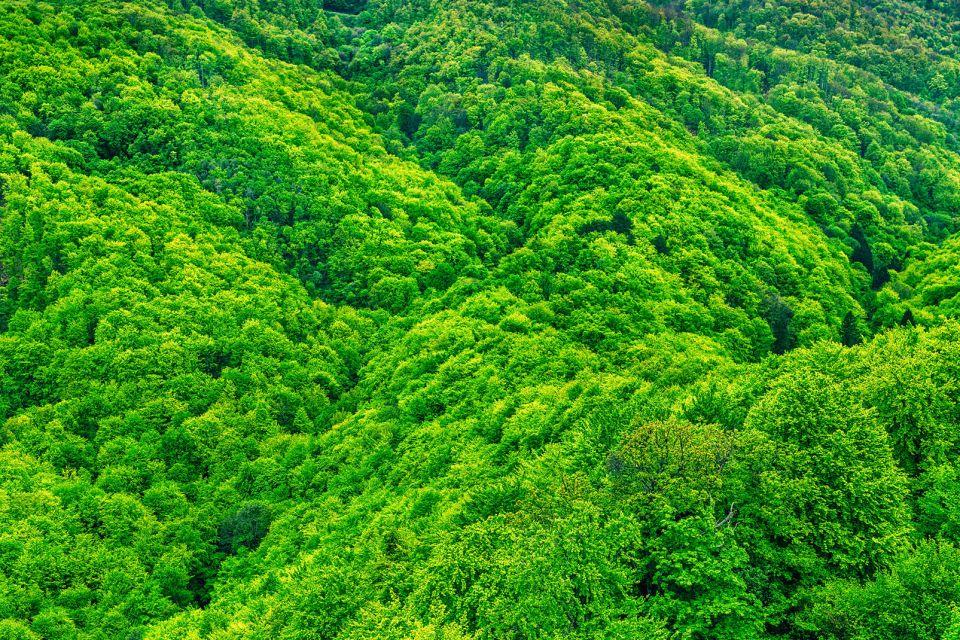 Les paysages, zagreb, medvednica, sljeme, foret, kraljicin zdenac, zagreb, croatie, medvenica, europe