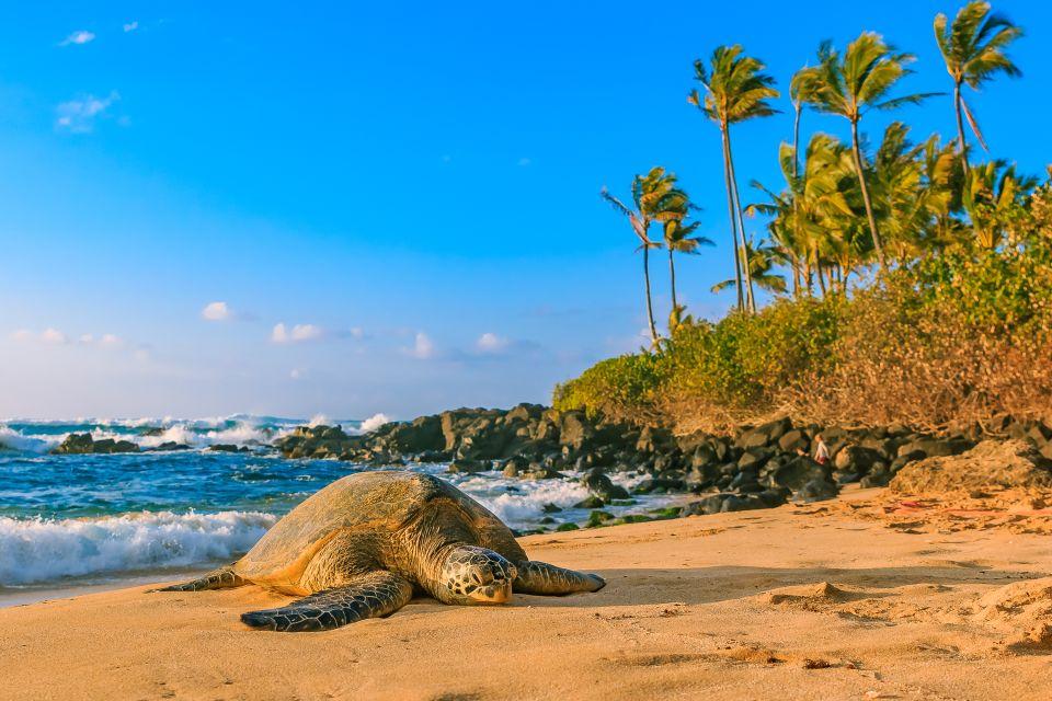 Les îles et les plages, Oahu, hawaii, etats-unis, amérique, tortue, north shore, reptile, faune, animal