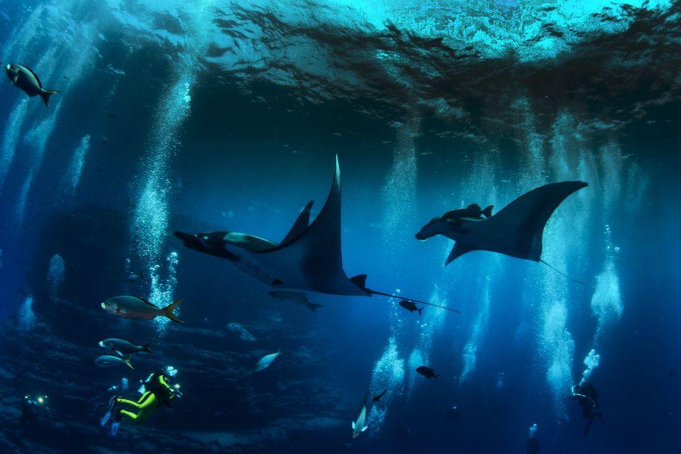 Les excursions, raie, manta, poisson, faune, sous-marine, mer, animal, etats-unis, amérique, hawaii, USA, plongée, plongeur