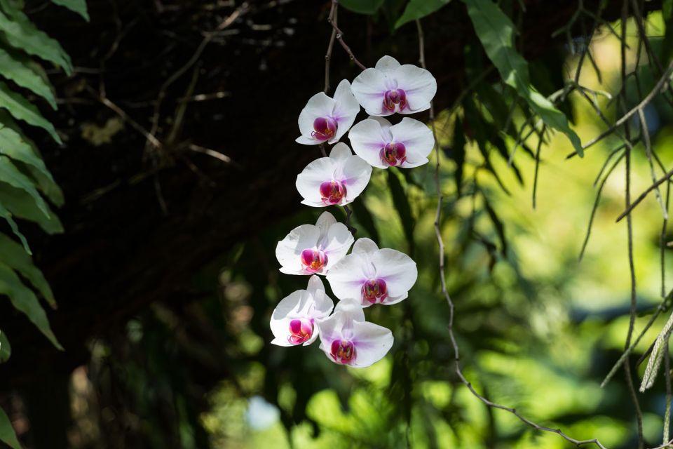 La faune et la flore, DESHAIES, GUADELOUPE, FRANCE, CARAIBES, jardin, flore, végétation, botanique, fleur, orchidée