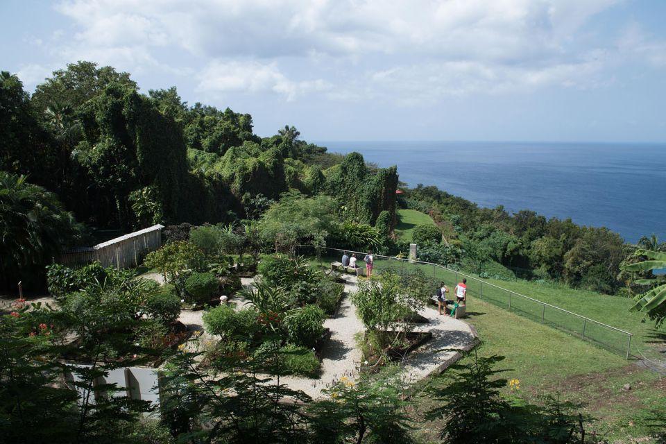La faune et la flore, DESHAIES, GUADELOUPE, FRANCE, CARAIBES, jardin, flore, végétation, botanique