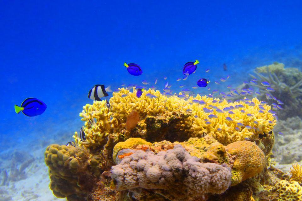 La faune et la flore, réserve, cousteau, guadeloupe, antilles, caraïbes, faune, poisson, animal, corail, poisson-chirurgien