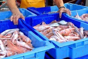 Les activités et les loisirs, palamos, poisson, pêche, agriculture, vente, criée, catalogne, espagne