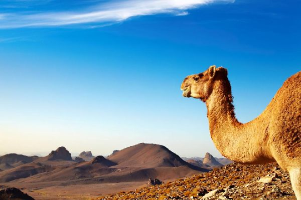 The Assekrem , The plateau of Assekrem , Algeria