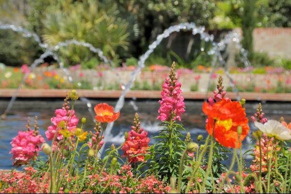Les paysages, Brookgreen Gardens, caroline du nord, caroline, etats-unis, amérique, USA, flore, jardin, nature
