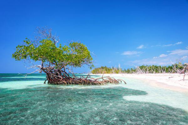 , Las playas de los Cayos, Las costas, Cuba