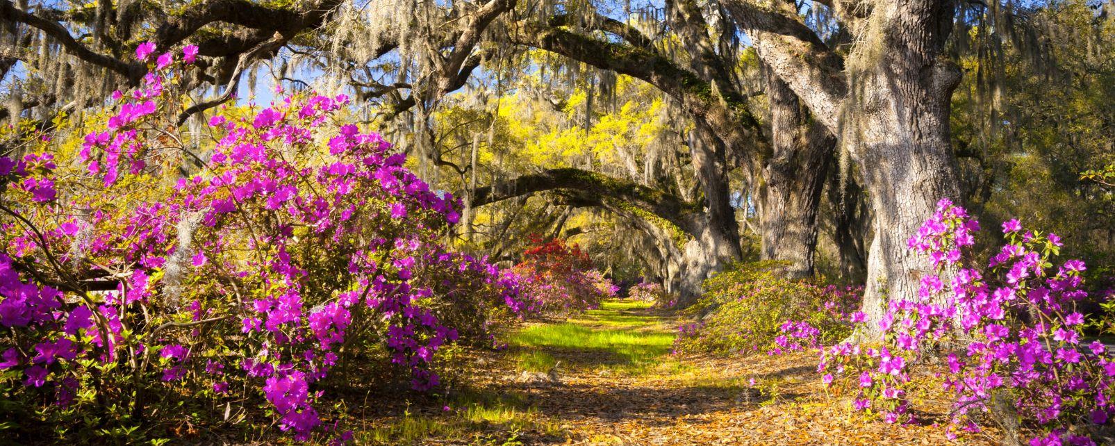 Les paysages, caroline du nord, caroline, etats-unis, amérique, USA, flore, jardin, nature, magnolia plantation