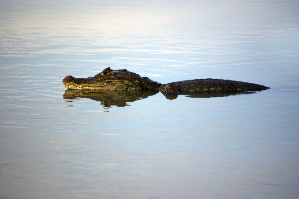 La faune et la flore, Parc, National, cano negro, réserve, costa rica, amérique centrale, amérique, faune, animal, crocodile, reptile
