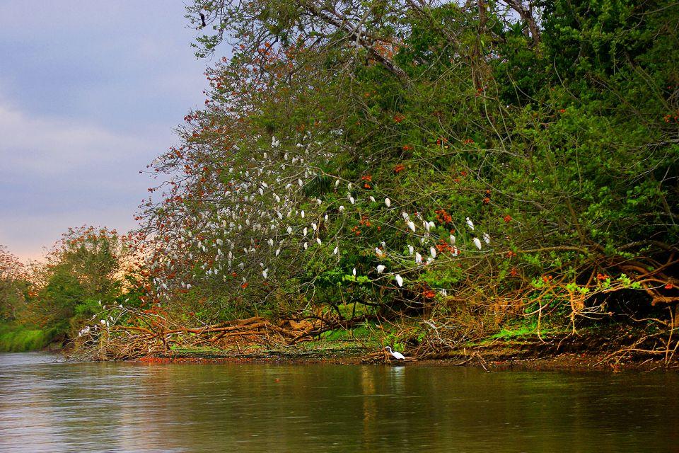 La faune et la flore, Parc, National, cano negro, réserve, costa rica, amérique centrale, amérique, faune, animal, oiseau