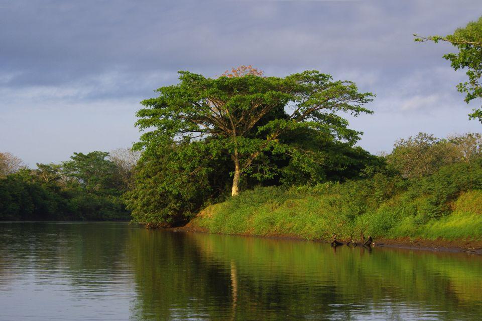 La faune et la flore, Parc, National, cano negro, réserve, costa rica, amérique centrale, amérique, faune, animal