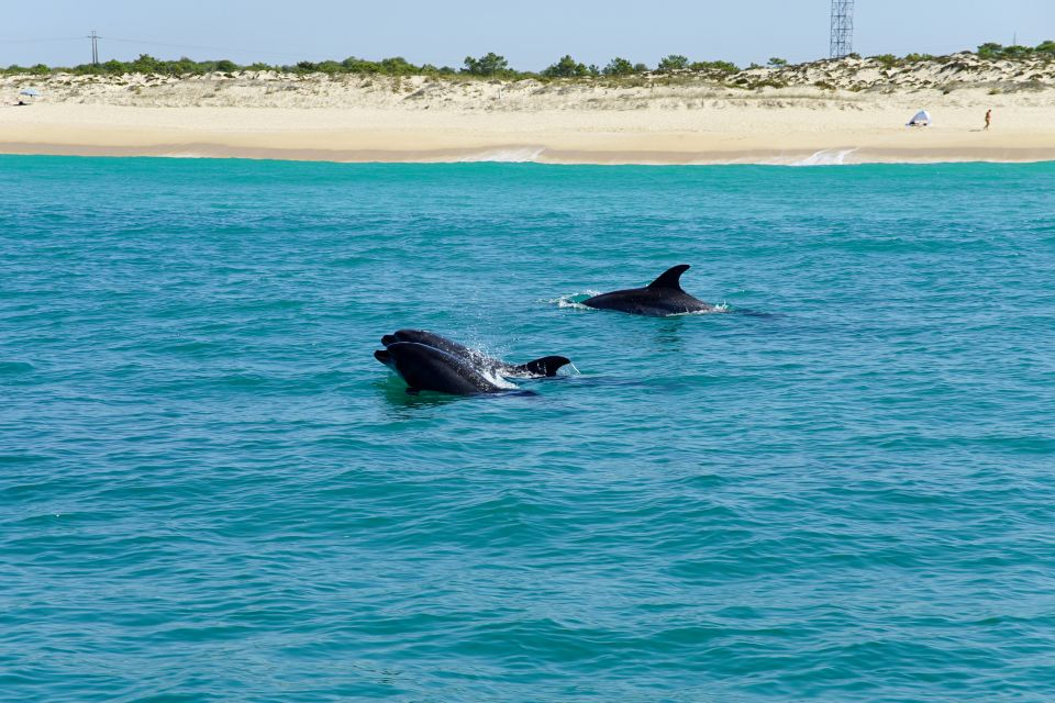 Les activités et les loisirs, Europe, Portugal, Alentejo, Troia, Estuaire Sado, europe, dauphin, animal, faune, sous-marine, mammifère, découverte, activité, mer