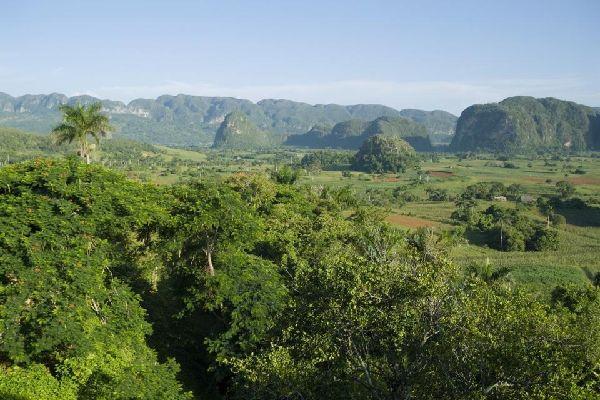 La végétation , Cuba