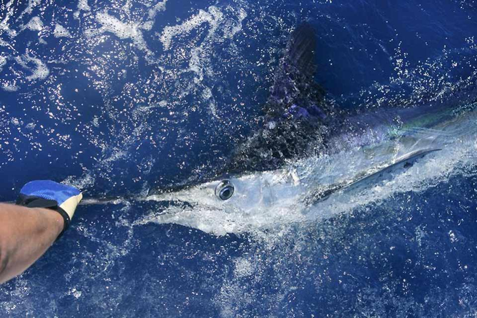 La pesca , I pesci dei Caraibi , Cuba