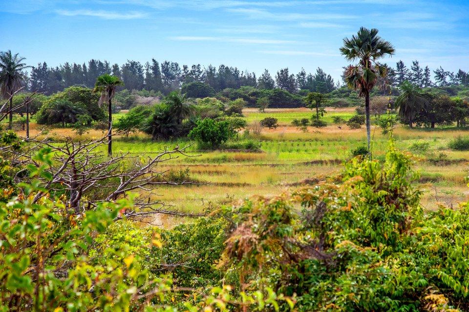 Ecoparc-Diembering, Les parcs et les réserves, La Casamance