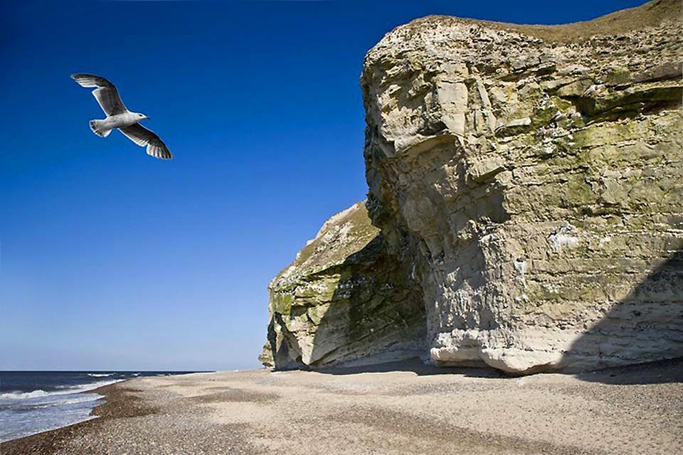 La route des falaises , Bulbjerg à Jutland , Danemark