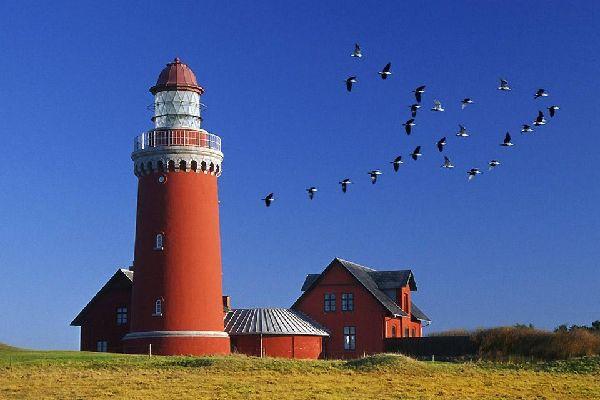 The birds , A flock of birds over a lighthouse , Denmark