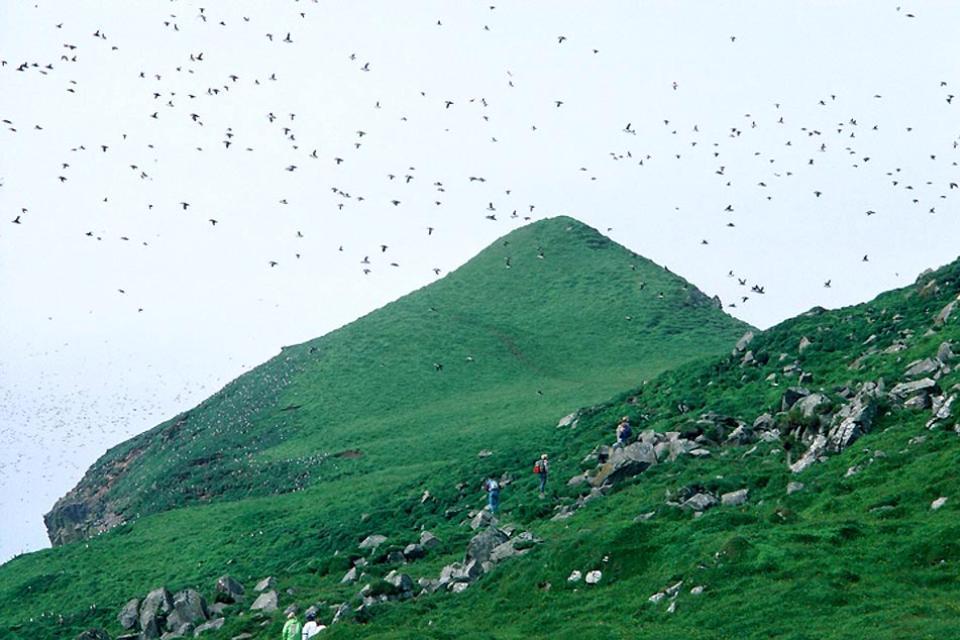 Les oiseaux , Un vol d'oiseaux sur les îles Féroé , Danemark