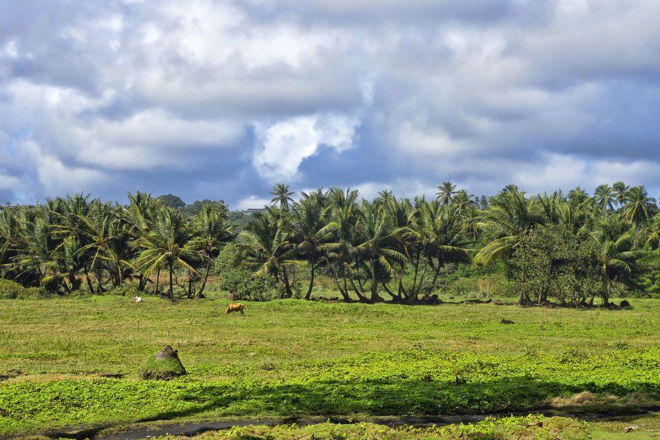 Die Plantagen, Die Landschaften, Dominica