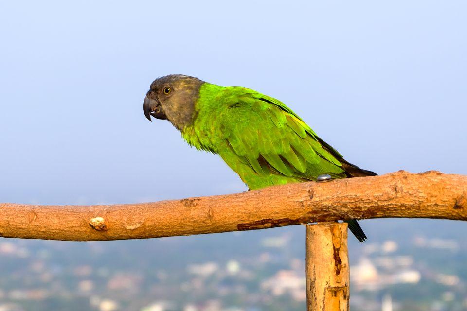 , Seltene Arten, Die Fauna und Flora, Dominica