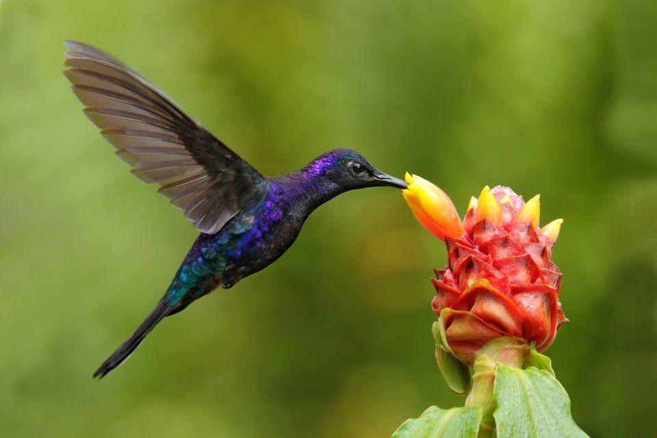 Seltene Arten, Die Fauna und Flora, Dominica