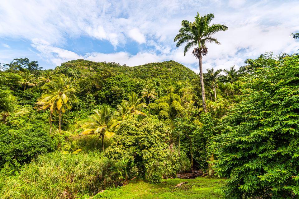 , Die Wälder, Die Fauna und Flora, Dominica