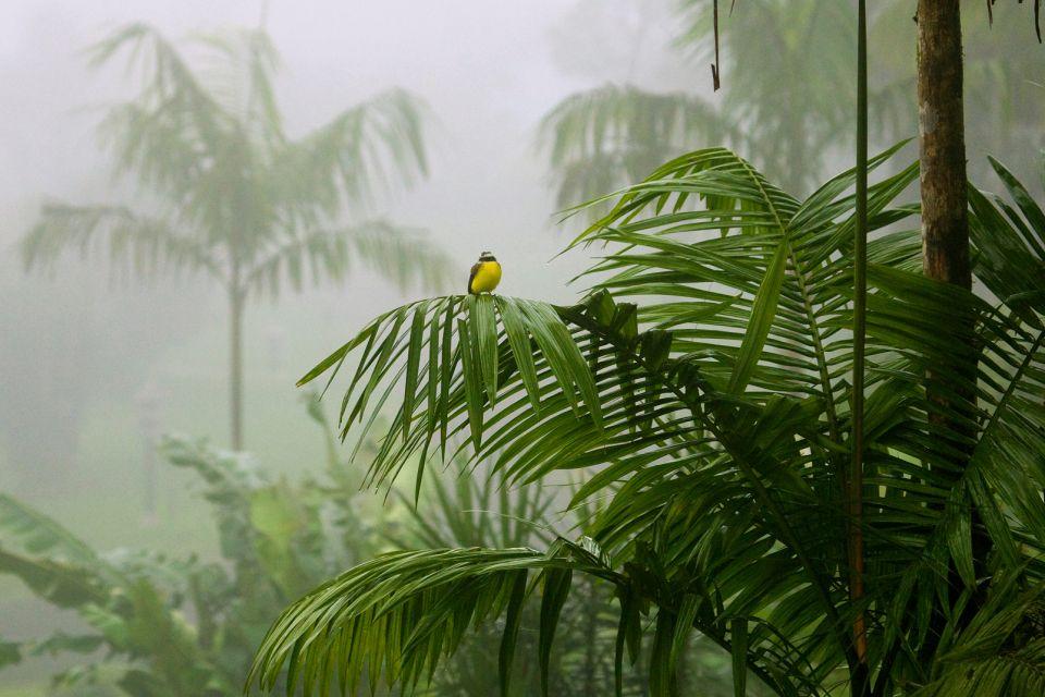 Die Wälder, Die Fauna und Flora, Dominica