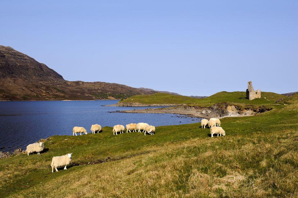 La faune et la flore, Royaume-Uni, Europe, écosse, ecosse, faune, animal, mouton, mammifère