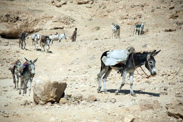 Die arabische Wüste , Die Wüste Sinai , Ägypten