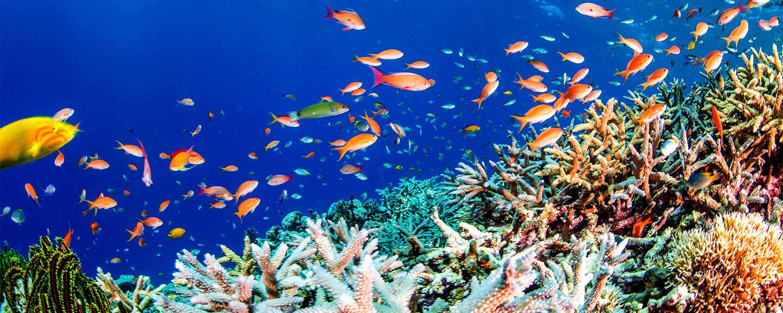Pesce pagliaccio e anemone, Le immersioni, Le rive, Marsa Alam, Egitto