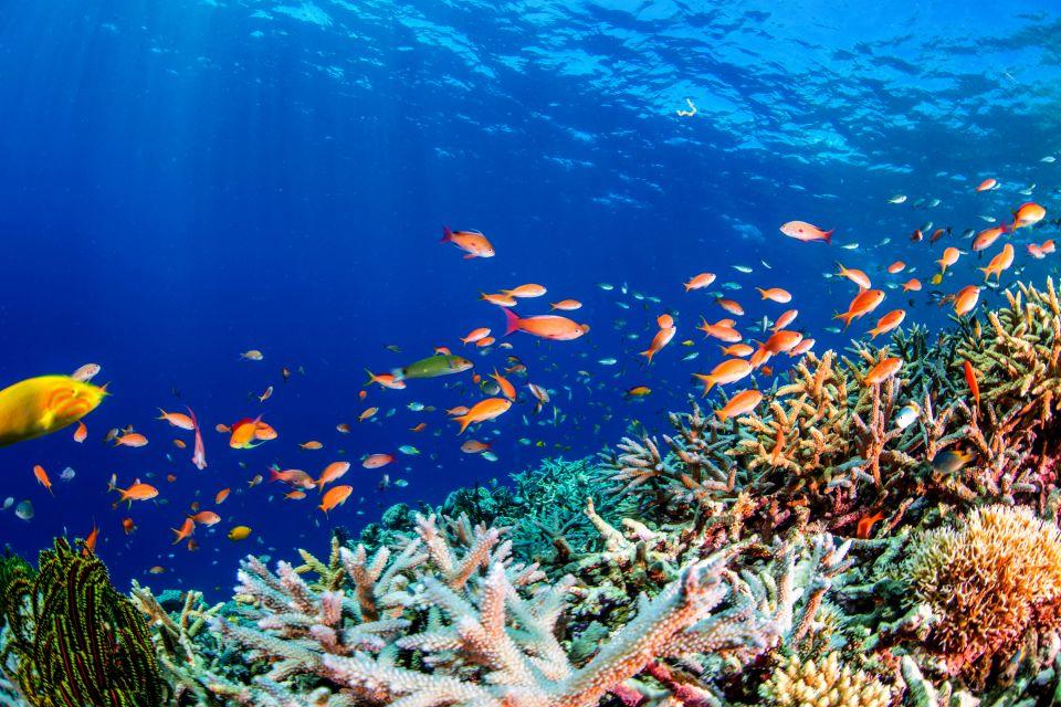 Les fonds marins, Les fonds de la Mer rouge, Les côtes, Marsa Alam, Egypte