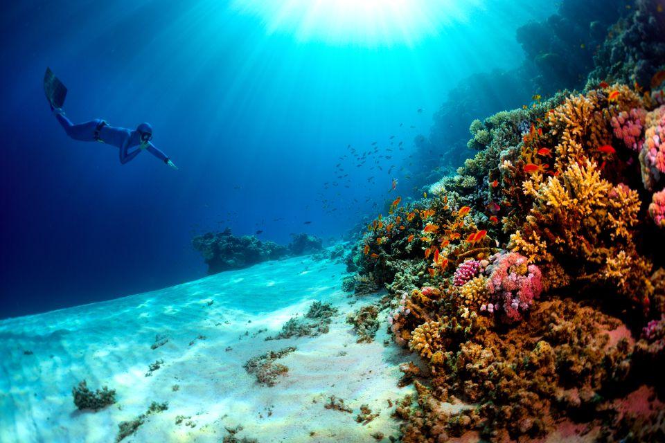 La vie du récif coralien, Les fonds de la Mer rouge, Les côtes, Marsa Alam, Egypte