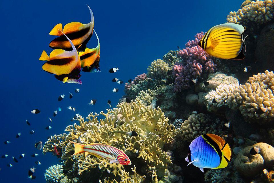 Diversité des espèces animales, Les fonds de la Mer rouge, Les côtes, Marsa Alam, Egypte