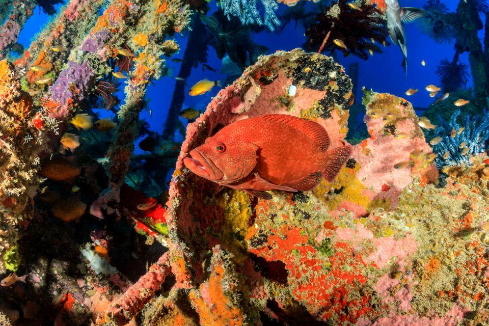 Les côtes, mérou, animal, faune, sous-marine, sous-marin, poisson, égypte, afrique, moyen-orient, mer rouge, plongée