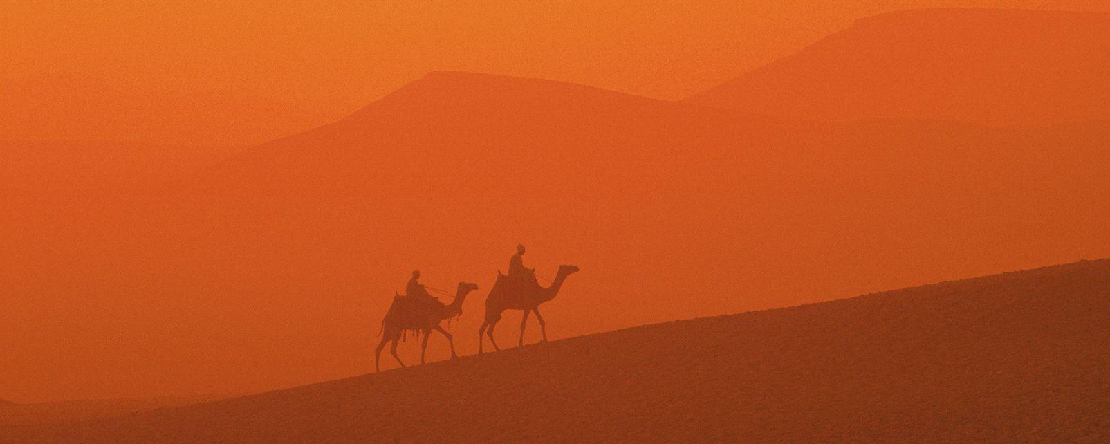 I dromedari, La fauna del deserto, La fauna e la flora, Egitto