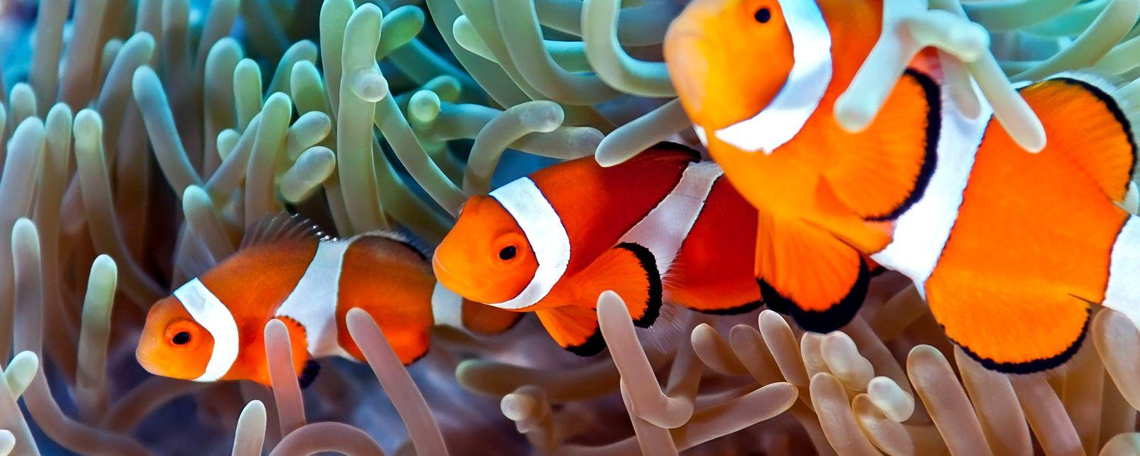 Il merluzzo, La fauna sottomarina, La fauna e la flora, Egitto