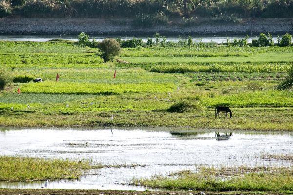 , L'agricultura, La fauna e la flora, Egitto