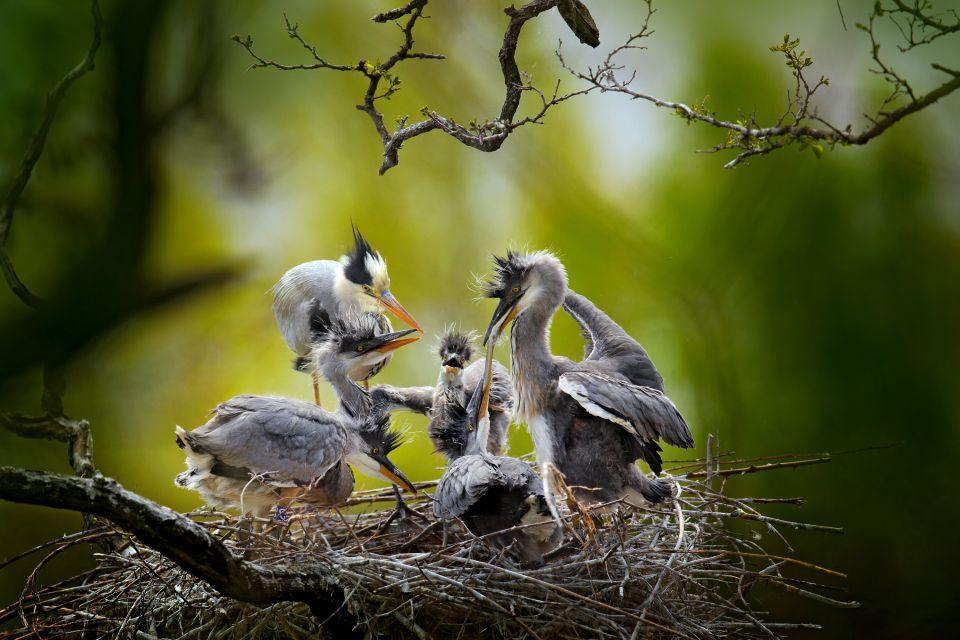 La faune et la flore, héron, gris, oiseau, faune, nil, animal, égypte, afrique, échassier