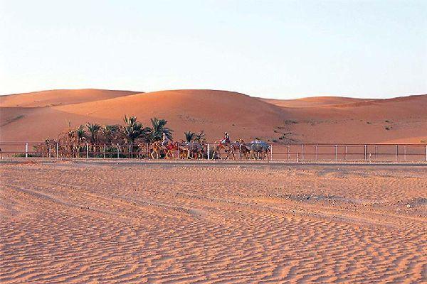 Al-Ain Oasis , United Arab Emirates