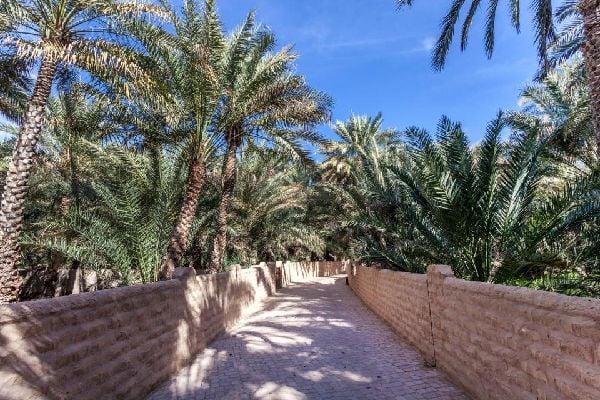 Al-Ain Oasis , The Al-Ain Oasis , United Arab Emirates