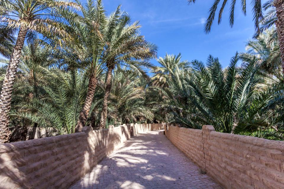 Al-Ain Oasis , The Al-Ain Oasis , United Arab Emirates