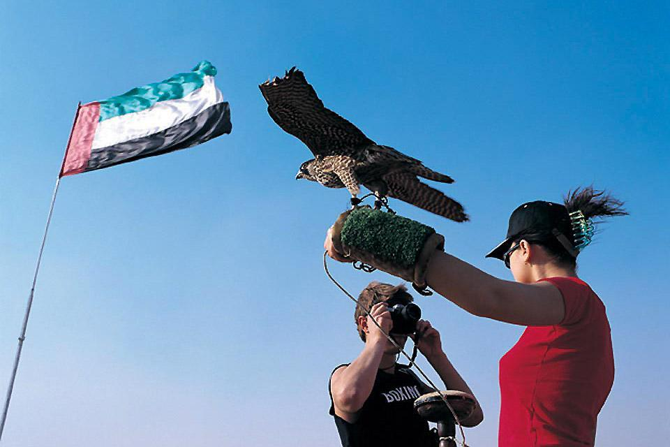 Falconry , Feathered thrills , United Arab Emirates