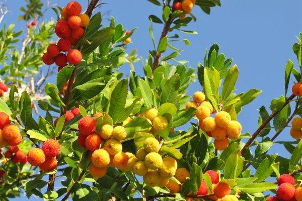 Die Flora , Spezialitäten , Algerien