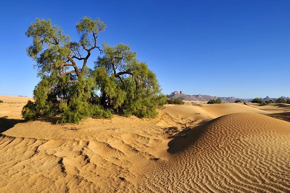 La flora , El desierto , Argelia