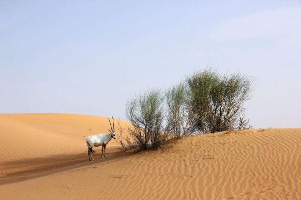 Sir Bani Yas Reserve , The Sir Bani Yas Reserve, United Arab Emirate , United Arab Emirates