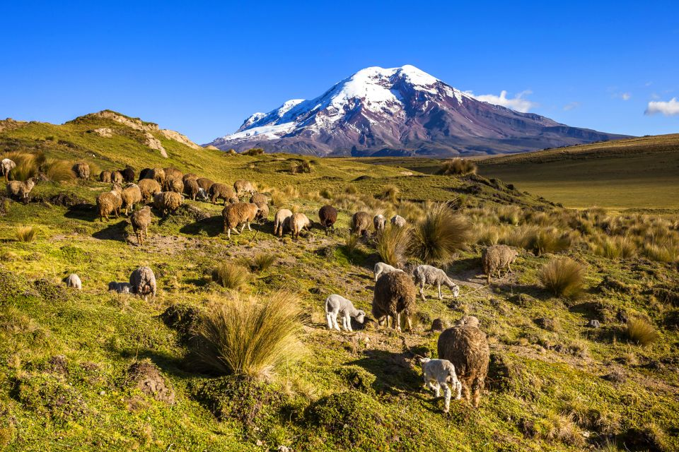 Les paysages, Snowdrop, Majestic, National Landmark, Nature, Sheep, Sunset, Volcano, Mountain Peak, Andes, Mountain, Ice, Snow, Chimborazo